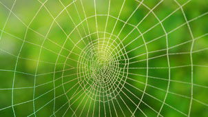 Spider web against green background